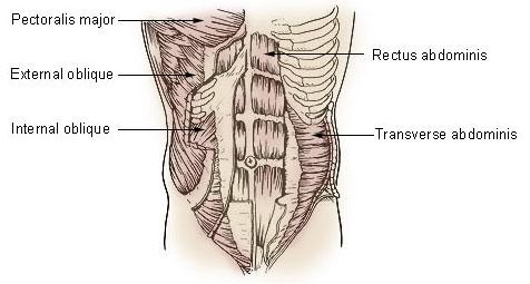 Articles Core Flexibility Core Training Core Muscle Exercises
